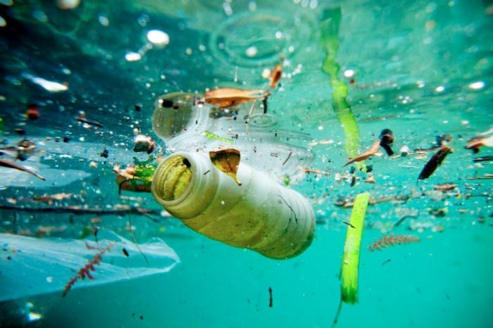 nine-out-of-ten-seabirds-have-plastic-in-their-stomach-australian-study-on-plastic-marine-debris-finds-body-image-1441127694.jpg